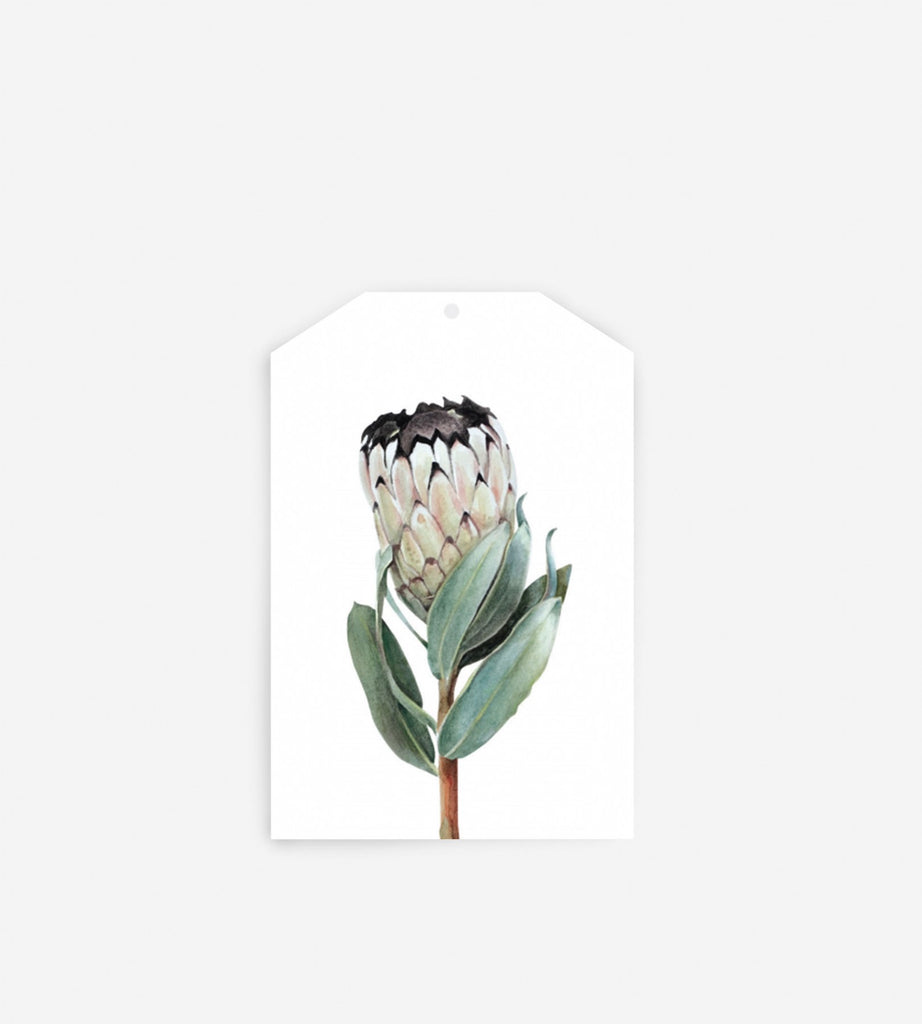 Father Rabbit Stationery Gift Tag | Protea