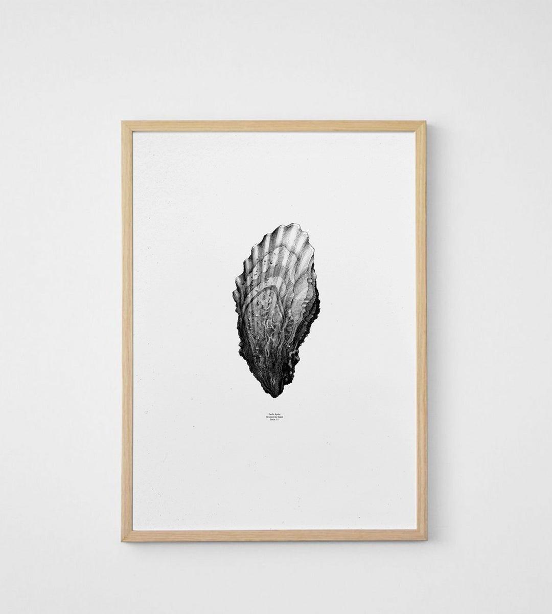Paper Collective | Nature 1:1 Oyster | White