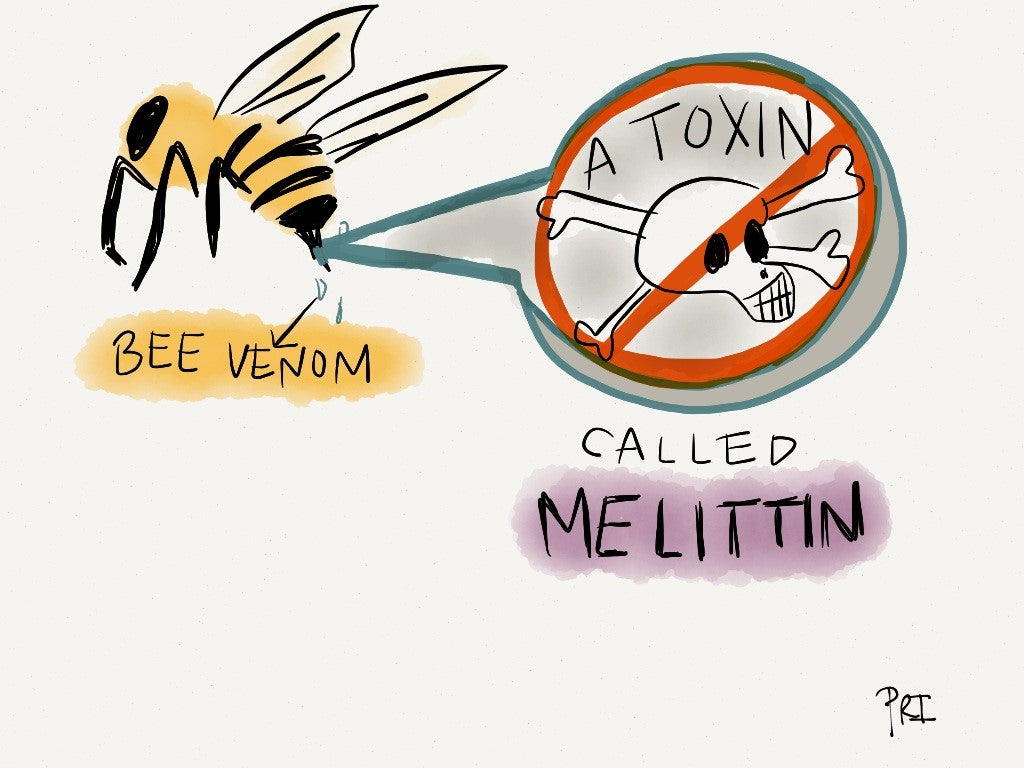 MELITTIN, A KEY INGREDIENT IN BEE VENOM, DESTROYS HIV