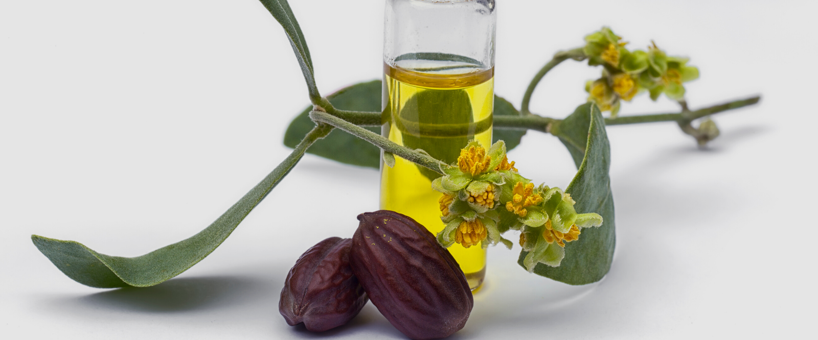 jojoba oil with seeds for use in holistic skincare