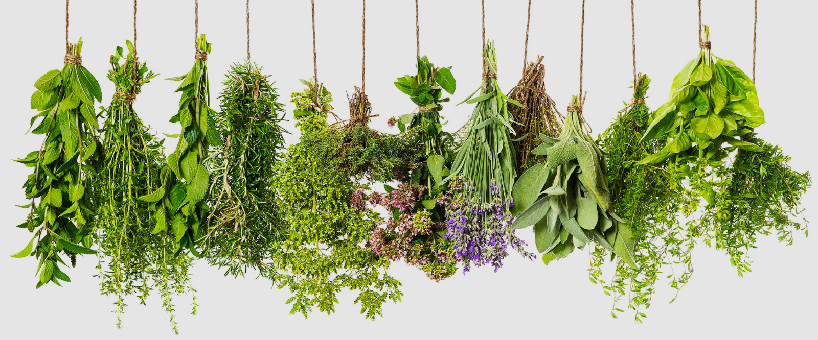 herbs drying for use in our holistic skincare