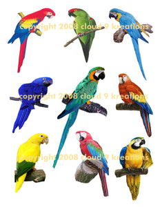 Parrots and Macaws Digital Collage Sheet