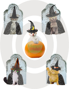 Bewitching Kittens Digital Collage Sheet