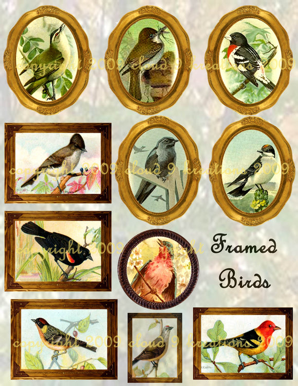Mixed Birds Framed Digital Collage Sheet