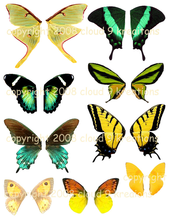 Green & Yellow Butterfly Wings