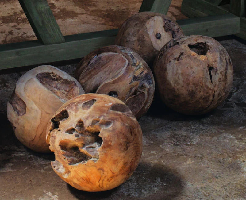 Padmas Plantation Teak Root Ball