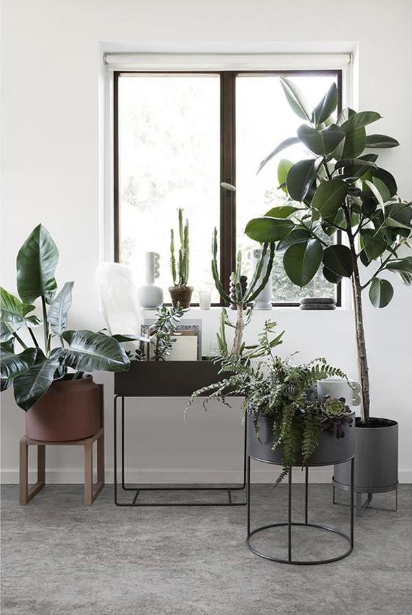 a large grouping of plants in front of a window