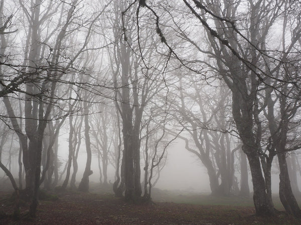Haunted places in Northern Ireland to visit this Halloween