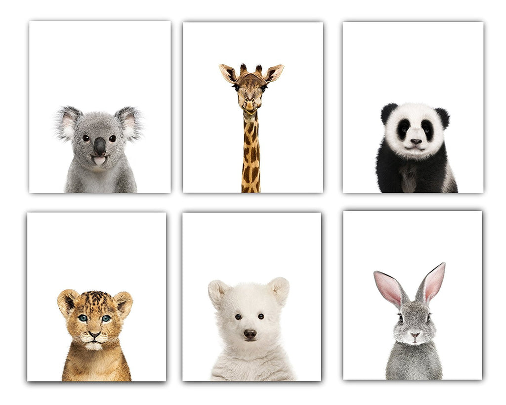 Baby Animals Nursery Wall Decor | Baby Room Decor Animal Nursery Pictures 8x10 | Baby Nursery Decor Cute Animal Photography Wall Prints| Set of 6 Unfr