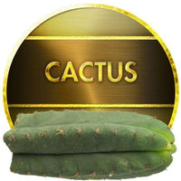 Cactus by Inawera