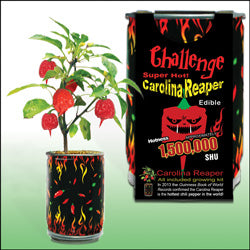 The Magic Plant Carolina Reaper Growing Kit - Lucifer's House of Heat