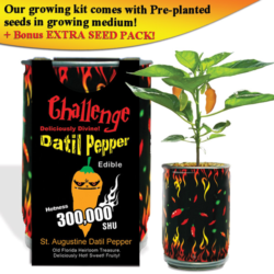 The Magic Plant Datil Pepper Growing Kit