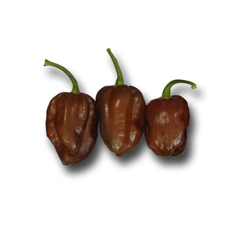 Habanero Chocolate Seeds - Lucifer's House of Heat
