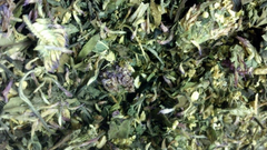Fidnemed (Sacred Grove) - Organic Green Tea Herbal Blend
