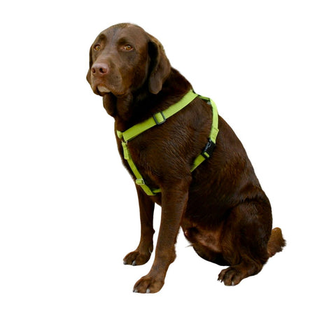 Hemp Basic Canvas Harness Avocado