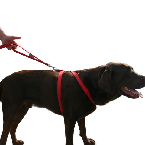 Hemp Basic Canvas Dog Harness Red