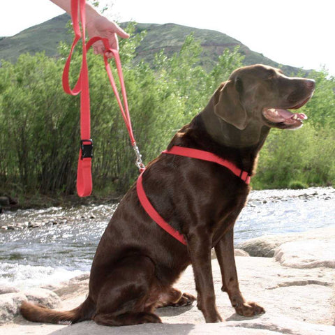 Hemp soft Hemp Durable Hemp Natural that is the Hemp Basic Red Harness from The Good Dog Company