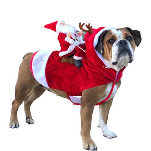 Santa Claus On a Dog