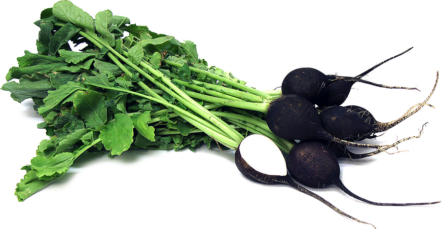 Radish Black - bunch