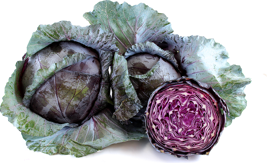 Cabbage Red - whole