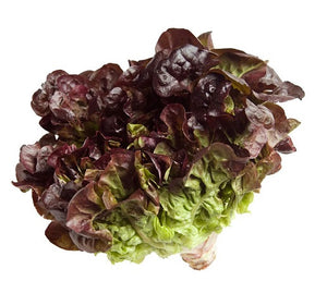 Lettuce Red Fancy - each