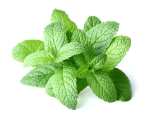 Herbs Mint - per bunch