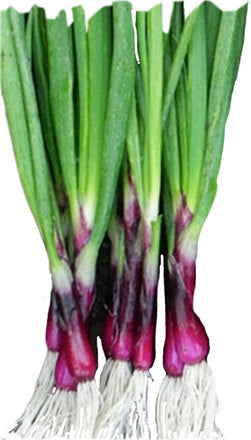 Onion Purple Eschallots - per bunch