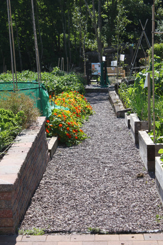Raised Beds, Vegetable Beds, Allotment, Allotment growing, Timber raised beds, Kitchen garden, Edible plants