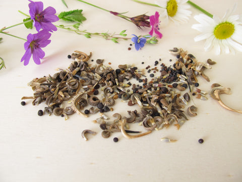 wildflower meadow, wildflower seed, native irish wildflowers, native irish meadow, native wildflower seed