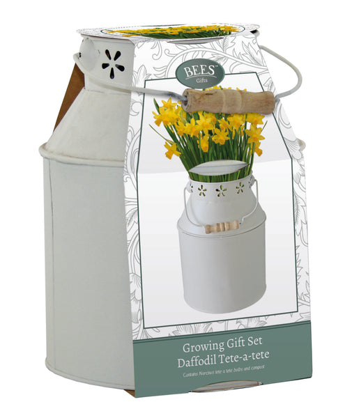 Ornamental Milk Churn Gift Set with Tete a Tete Daffodils, Spring flowering Bulb, Narcissus Tete a Tete, dwarf daffodils, Gardening gifts, Gifts for gardeners, Christmas gifts for gardeners