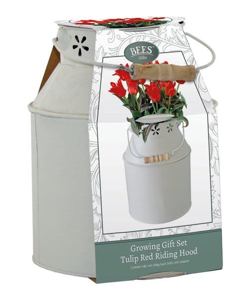 Ornamental Milk Churn Gift Set with Tulip Red Riding Hood, Spring flowering Bulb, Tulip Red Riding Hood, Red Tulips, Gardening gifts, Gifts for gardeners, Christmas gifts for gardeners