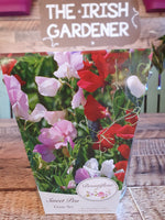 Sweet Pea, Sweet Pea Seed, Scented Sweet Pea, Best Sweet Pea for scent, Gardening gifts, gifts for gardeners, Sweet Pea in a bucket, sweet pea for cutting.