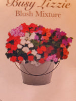 Busy Lizzie Seeds, Busy Lizzie in a Bucket, Busy Lizzie Plants, Bedding Plants, Bedding Plant seeds, Gardening gifts, gifts for gardeners, Christmas Gifts, Christmas Gifts for Gardeners