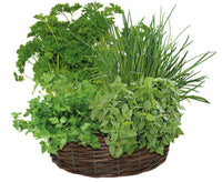 Wicker Herb Wheel, grow your own herbs, edible plants, herbs, fresh herbs, herb seeds, herb plants, herb wheel, Basil seeds, oregano seeds, parsley seeds, chive seeds