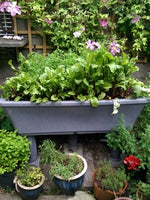 Raised Bed, Garden4me, Raised Planter, Granny and grandson gardening, Gyo,giy, grow your own food, sustainability, organic gardening, vegetable garden, growing vegetables, Lavender Plant,