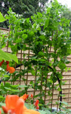Raised Bed, Garden4me, Raised Planter, Granny and grandson gardening, Gyo,giy, grow your own food, sustainability, organic gardening, vegetable garden, growing vegetables, Lavender Plant,, growing peas, pea plants, growing mangetout, mangetout plants,