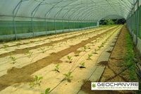 Organic Weed Block Fabric, Compostable weed block, vegetable plants growing in organic weed control fabric,