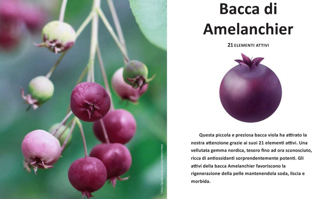bacca Amelanchier