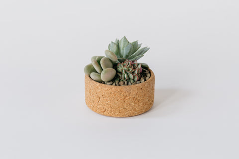 Small Cork Planter
