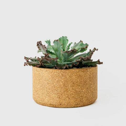 Low Cork Planter