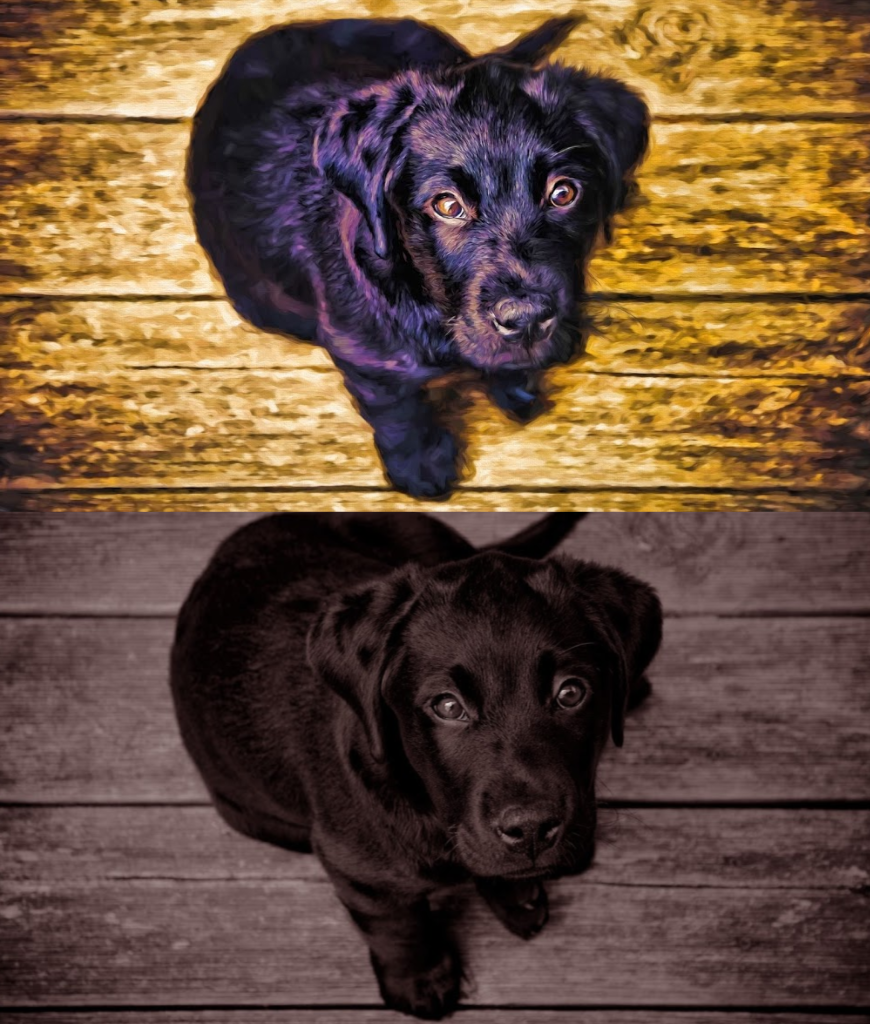 Transform your Favorite Pet Photo into a Forever Memory! - majorleaguecreative.com