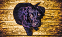 Load image into Gallery viewer, Transform your Favorite Pet Photo into a Forever Memory! - majorleaguecreative.com