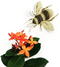 Honey Bee Vinyl Sticker
