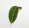 Calathea Leaf Vinyl Sticker