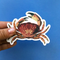Crab Vinyl Sticker