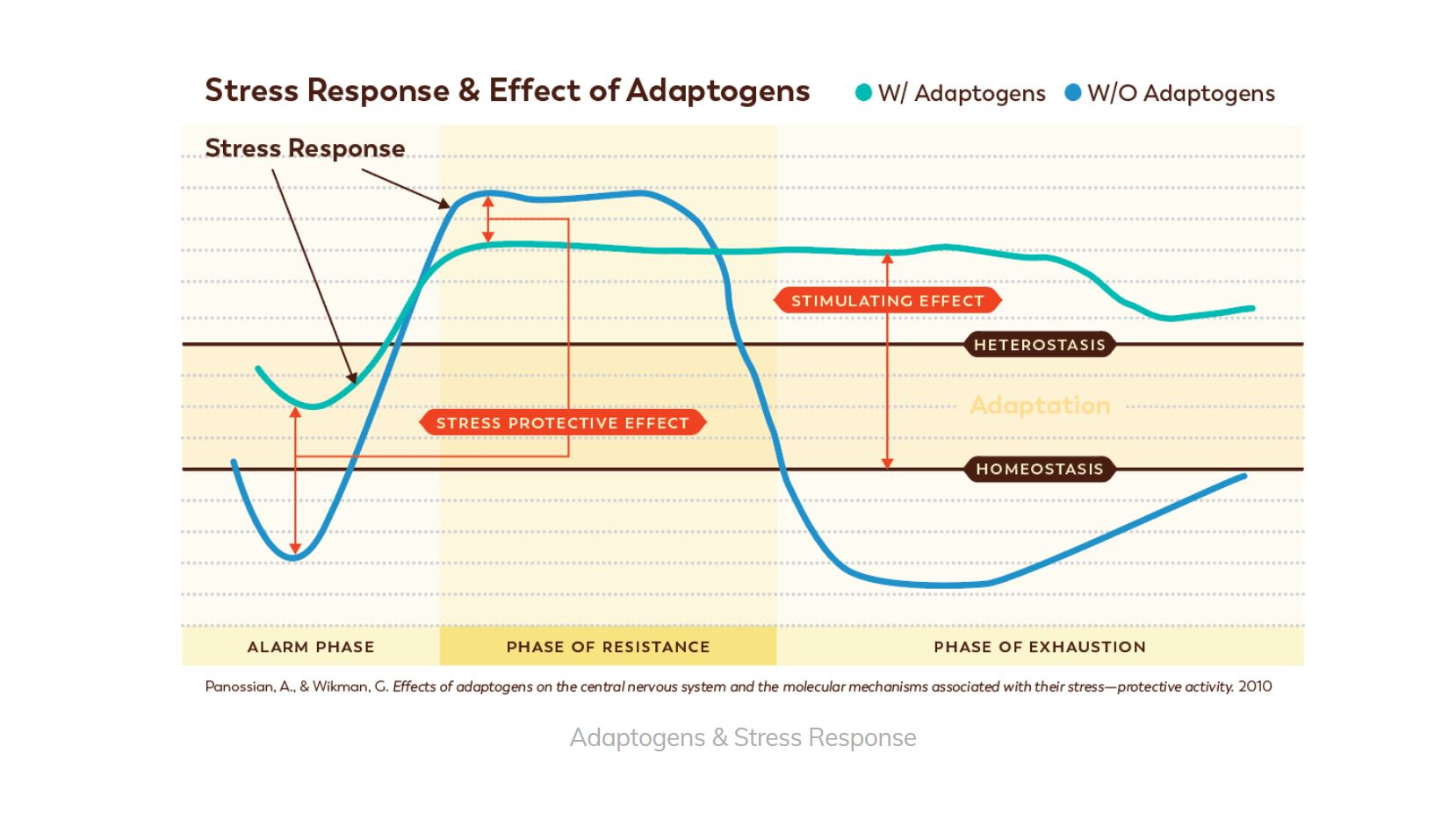 Chart explaining the Stress response and effect of Adaptogens