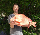 Red Emperor caught on Flasher RIgs