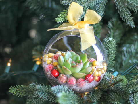 christmas succulent ornaments