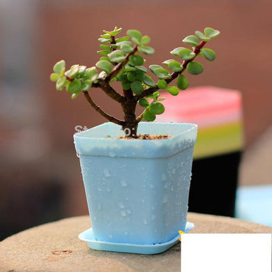 10 pcs/lot  Desktop flowerpot  Colorful gardening pots