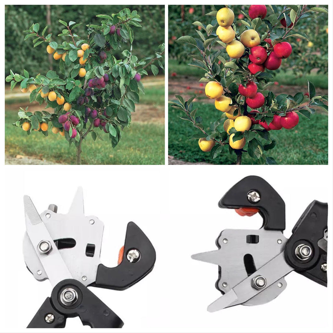 The Grafting Plants Together Tool